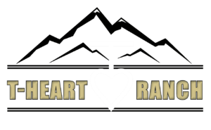 T-Heart Cattle   Your Source for quality high altitude simmental cattle.