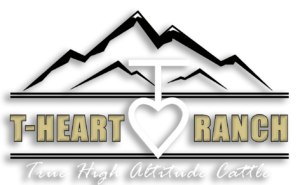 T-Heart Cattle | Your Source for quality high altitude simmental cattle.
