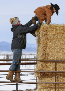 T-Heart Ranch High Altitude Cattle is your source for quality high altitude cattle, ranch located in beautiful Colorado.